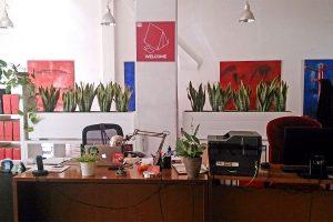 RecepcionKubik-Plants.jpg